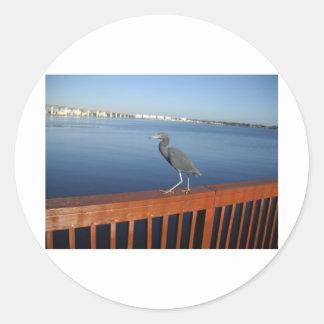 Little Blue Heron Round Sticker