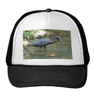 Little Blue Heron With Crayfish Mesh Hats