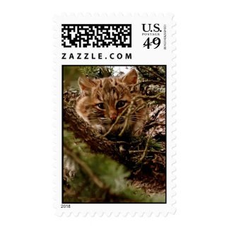 Little Bobcat Kitten Postage