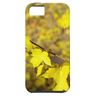 Little branch of maple with small yellow leaves cl iPhone SE/5/5s case