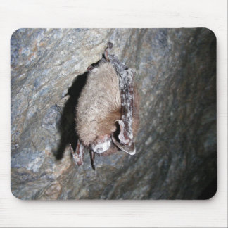 Little-brown bat displaying White-nose syndrome Mouse Pads