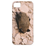 Little Brown Bat iPhone 5/5S Cover