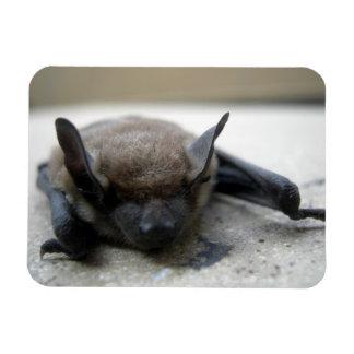 Little brown bat (Myotis lucifugus) Magnet