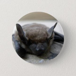 Little brown bat (Myotis lucifugus) Pinback Button