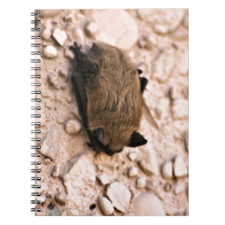 Little Brown Bat Notebook