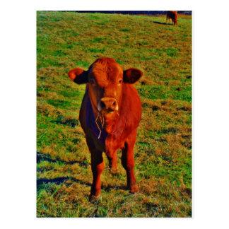Little Brown Cow Bright Green Grass Postcard