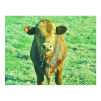 Little Brown Cow in Pastel Green Grass Postcard