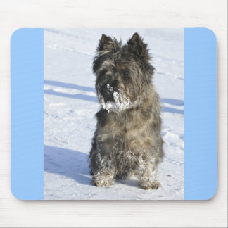 Little brown dog sit in the snow with lot of snow mouse pad