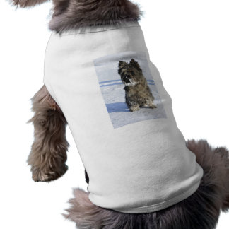 Little brown dog sit in the snow with lot of snow tee