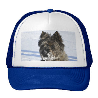 Little brown dog sit in the snow with lot of snow trucker hat