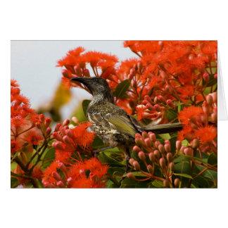 Little Brush Wattlebird Anthochaera Chrysoptera Card