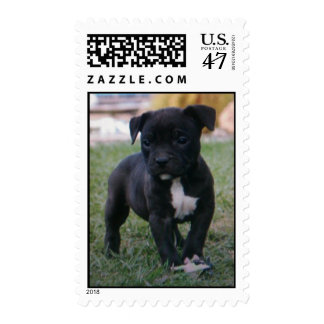 Little Bully Postage