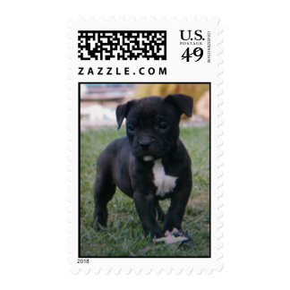 Little Bully Stamp