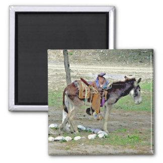 Little burro - big saddle 2 inch square magnet