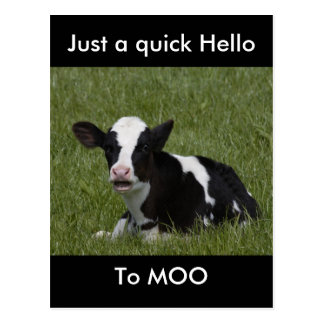 Little Calf Postcard