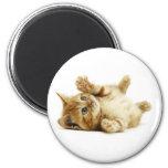 LITTLE CAT MAGNETS