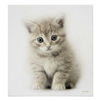 LITTLE CAT POSTERS