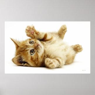 LITTLE CAT POSTER