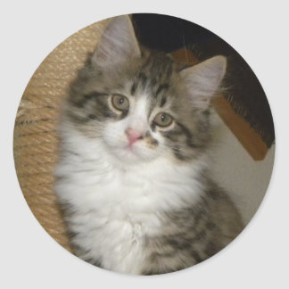 little cat Shuki Classic Round Sticker