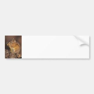 Little Chef Bumper Sticker