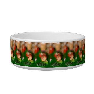Little Chicken Pet Food Bowls