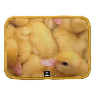 Little Chicks Planificadores