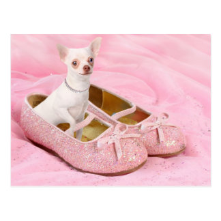 Little chihuahua in pink girly shoes with glitter postcard