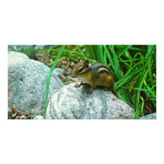 Little Chipmunk Card