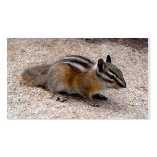 Little Chipmunk on Path Business Cards