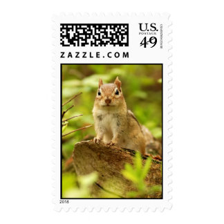 Little Chipmunk on the Lookout Postage