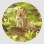 Little Chipmunk on the Lookout Round Stickers