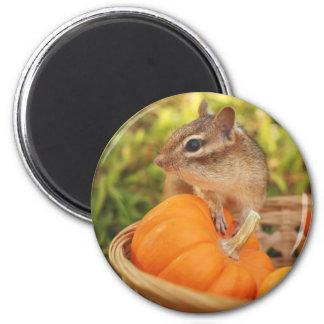 Little Chipmunk with Pumpkin Magnet