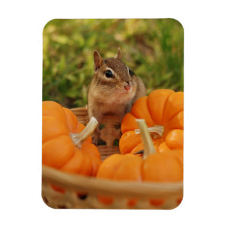 Little Chipmunk with Pumpkins Magnet