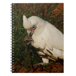 Little Corella Spiral Notebook