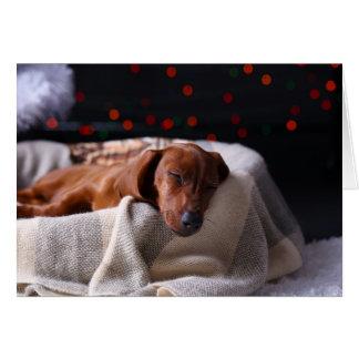 Little Cute Dachshund Puppy On Christmas Greeting Card