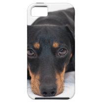 Little Dachshund iPhone SE/5/5s Case
