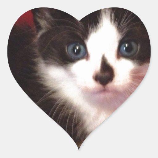 free kittens for adoption