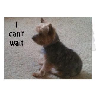 LITTLE DOG WITH BIG BIRTHDAY WISH CARD