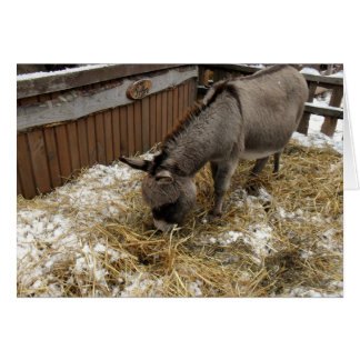 Little Donkey Christmas Greeting Card