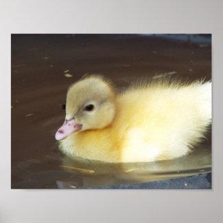 Little Duck Poster