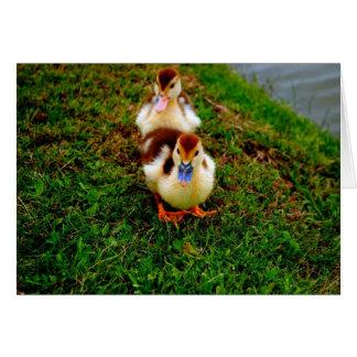 Little Duckies Card