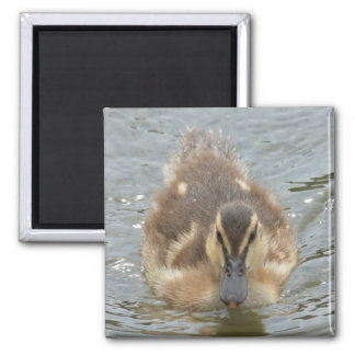little duckling 2 inch square magnet