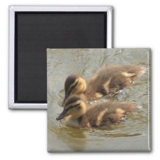 little ducklings 2 inch square magnet