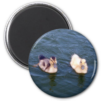 Little Ducklings Magnet