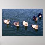 Little Ducklings Poster