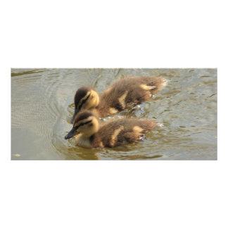 little ducklings rack cards