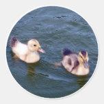 Little Ducklings Sticker