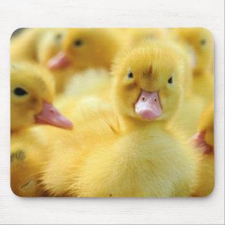 Little Ducks Mouse Pad