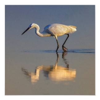 Little egret card