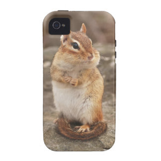Little Fat & Fluffy Chipmunk Vibe iPhone 4 Case